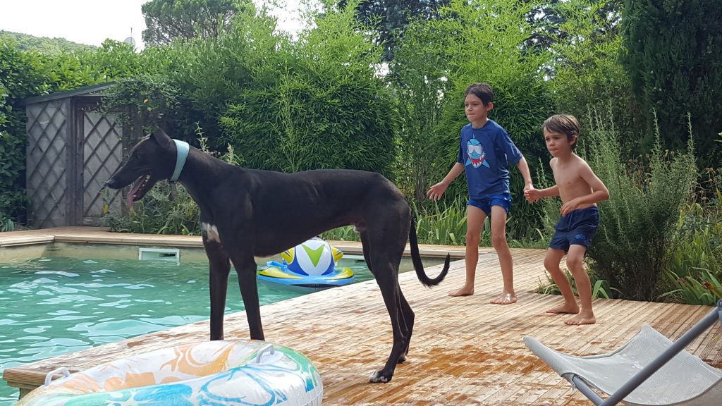 Dog Friendly Places to Stay in France