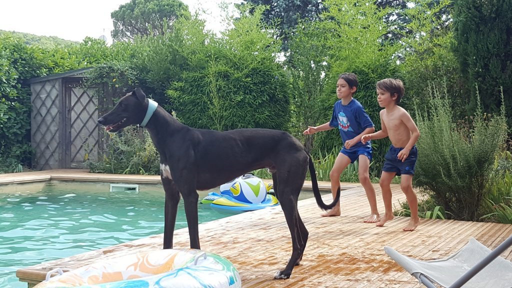 5 Child and Dog Friendly Places to Stay in France